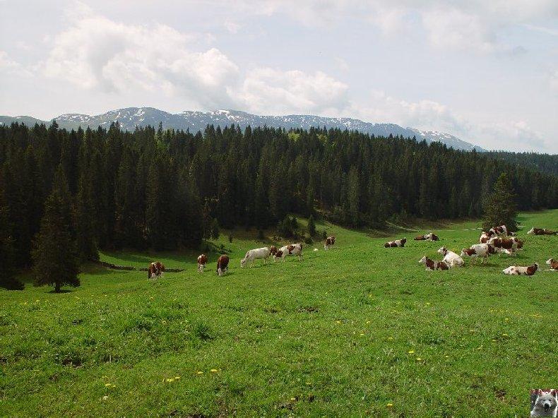 La Ferme du Haut-Jura 0015