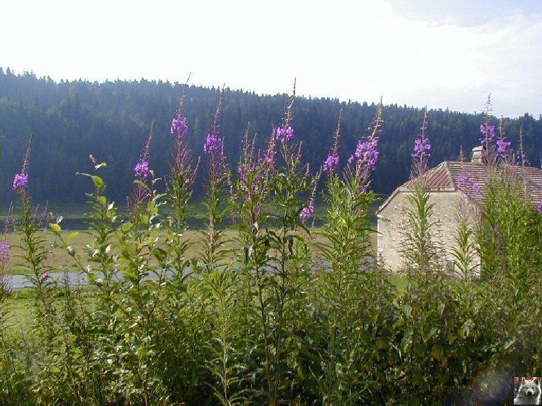 La Ferme du Haut-Jura 0026