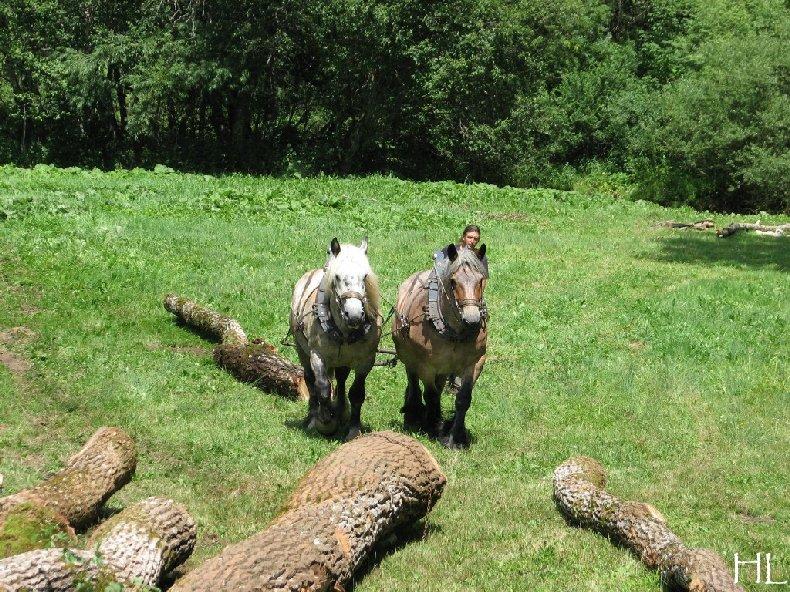 2010-07-27 : Débardage avec des chevaux - Hélène L. 0003