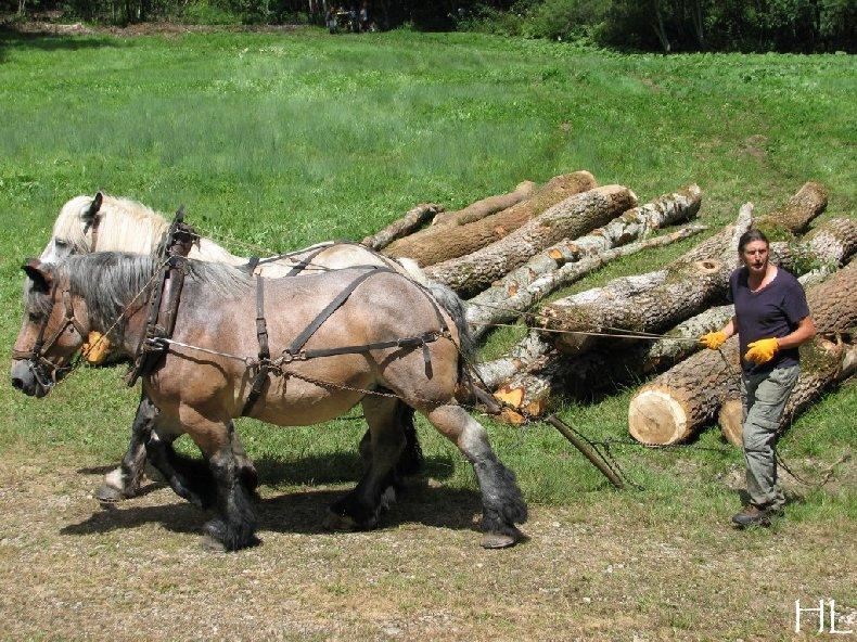 2010-07-27 : Débardage avec des chevaux - Hélène L. 0005