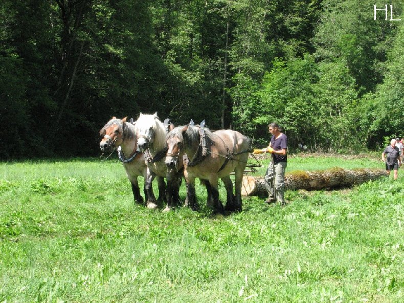 2010-07-27 : Débardage avec des chevaux - Hélène L. 0008