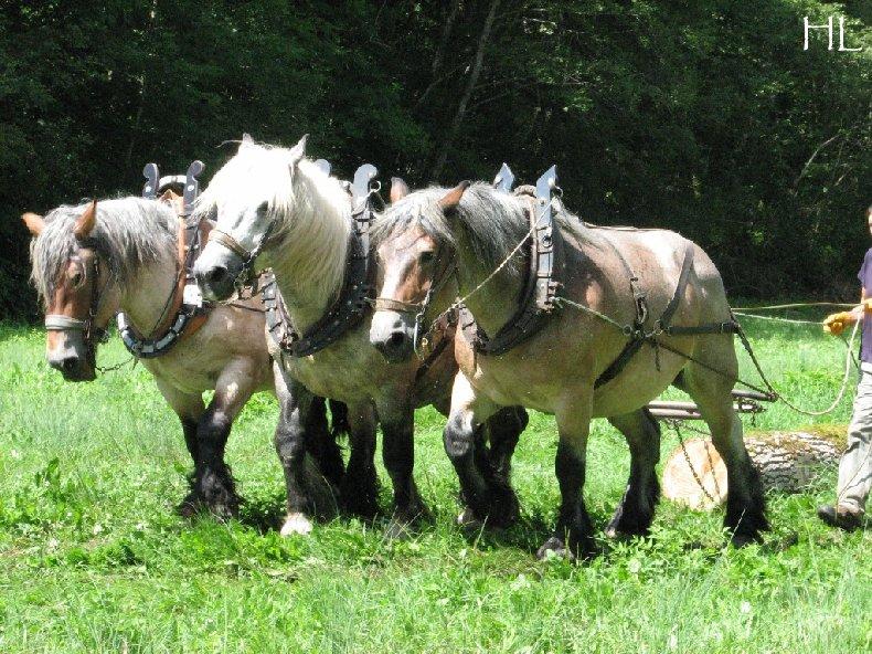 2010-07-27 : Débardage avec des chevaux - Hélène L. 0009
