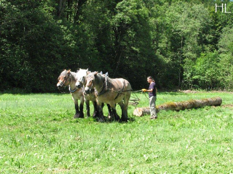 2010-07-27 : Débardage avec des chevaux - Hélène L. 0010