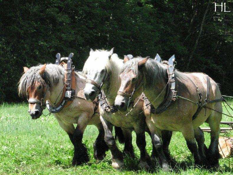 2010-07-27 : Débardage avec des chevaux - Hélène L. 0011