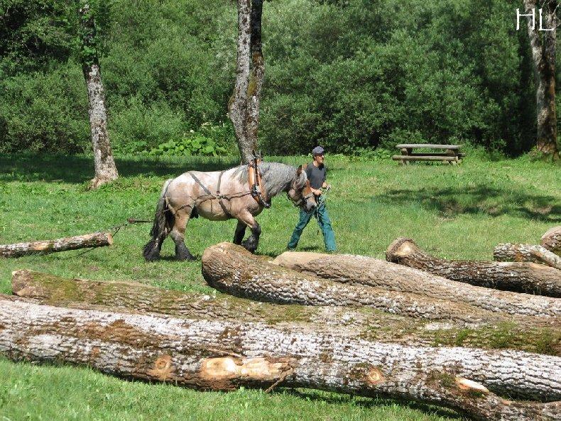 2010-07-27 : Débardage avec des chevaux - Hélène L. 0016