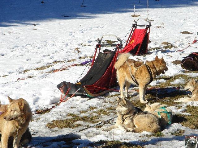 Attelages de chiens polaires - 04/02/2007 - (39) 0003