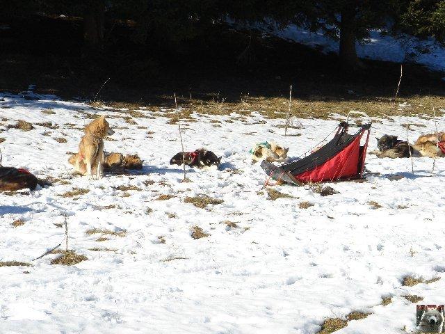 Attelages de chiens polaires - 04/02/2007 - (39) 0005