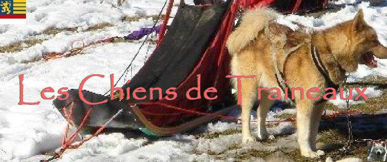 Attelages de chiens polaires - 04/02/2007 - (39) Logo