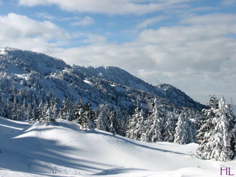 Au sommet de la Haute Chaine - Le Crêt de la Neige - 17/02/2010 0001