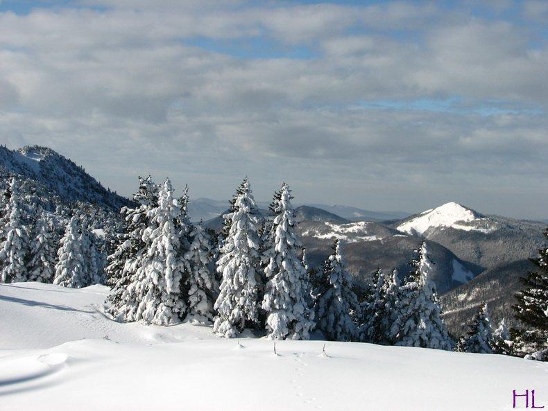 Au sommet de la Haute Chaine - Le Crêt de la Neige - 17/02/2010 0003