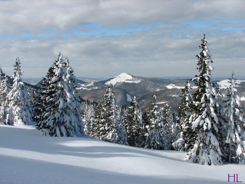 Au sommet de la Haute Chaine - Le Crêt de la Neige - 17/02/2010 0010