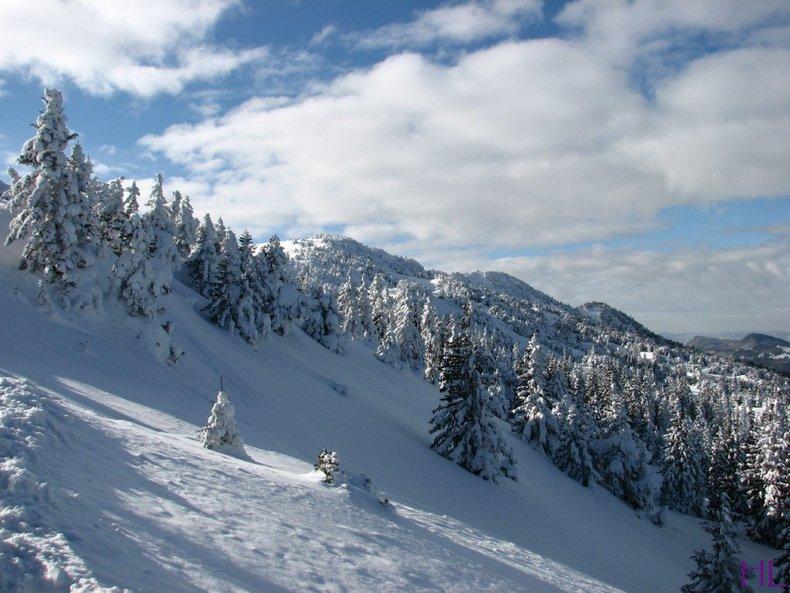 Au sommet de la Haute Chaine - Le Crêt de la Neige - 17/02/2010 0011