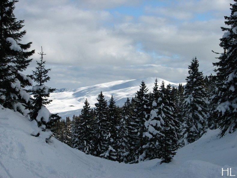 Au sommet de la Haute Chaine - Le Crêt de la Neige - 17/02/2010 0014