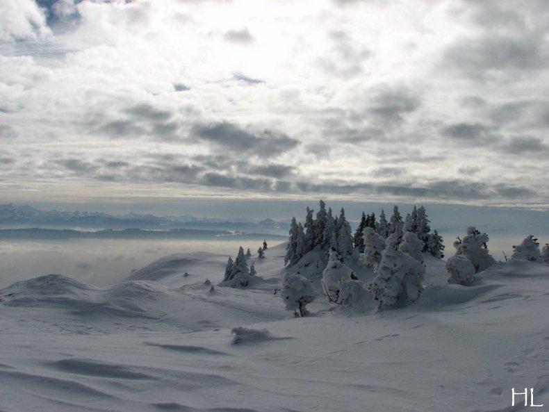 Au sommet de la Haute Chaine - Le Crêt de la Neige - 17/02/2010 0021