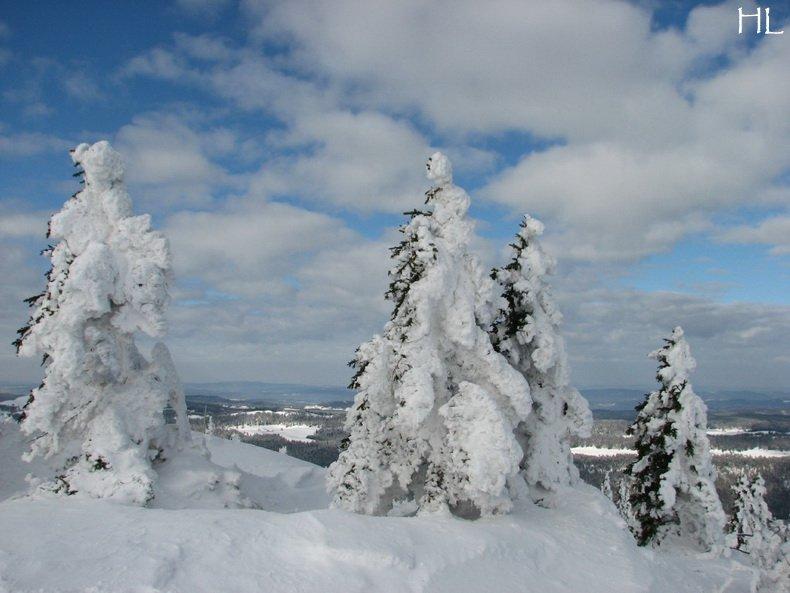 Au sommet de la Haute Chaine - Le Crêt de la Neige - 17/02/2010 0023