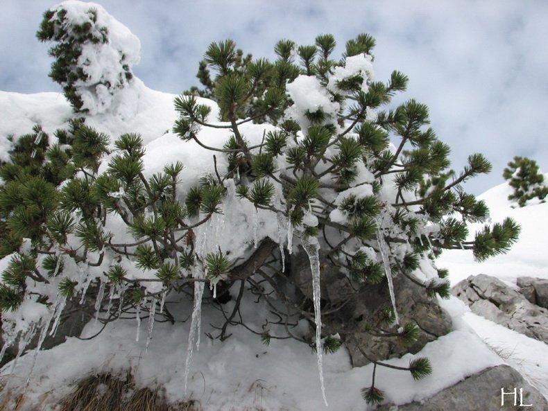 Au sommet de la Haute Chaine - Le Crêt de la Neige - 17/02/2010 0043