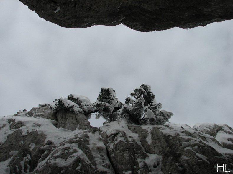 Au sommet de la Haute Chaine - Le Crêt de la Neige - 17/02/2010 0050