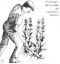 La Gentiane - Fleurs, Racines et Distillation - (25) 0000