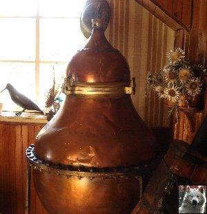 La Gentiane - Fleurs, Racines et Distillation - (25) 0005
