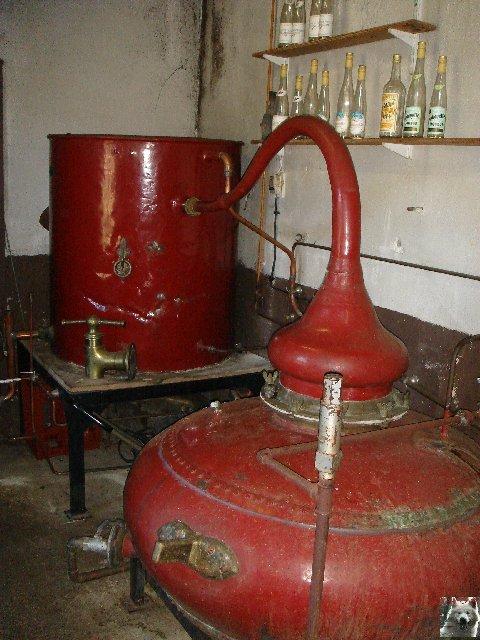 La Gentiane - Fleurs, Racines et Distillation - (25) 0011