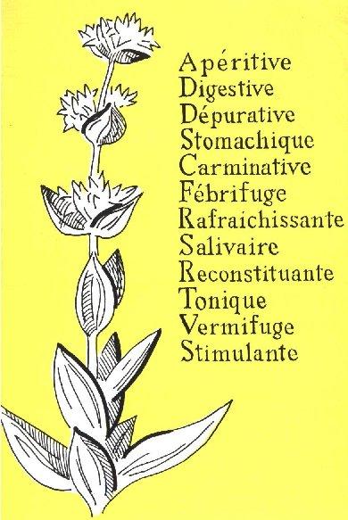 La Gentiane - Fleurs, Racines et Distillation - (25) 0016
