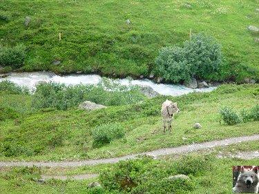 La Furka Bergstrecke ( Entre Uri et Valais ) 0034
