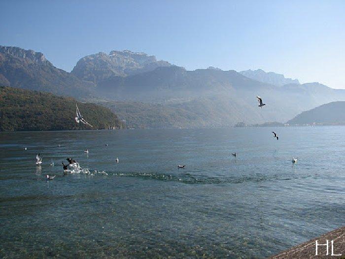 Le lac en partage - Un très inhabituel lac d'Annecy - 24-10-2011 Hl_annecy_012