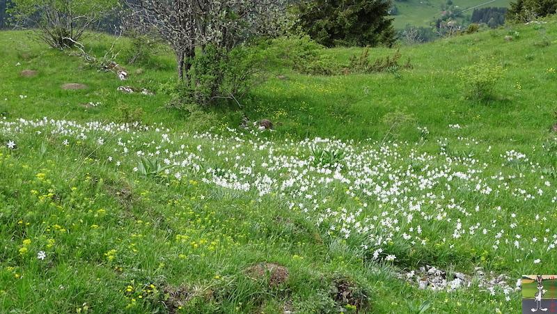[39-01] : 2018-05-26 : La Croix des Couloirs et Sabots de Vénus - Haut-Jura 2018-05-26_croix_couloirs_17
