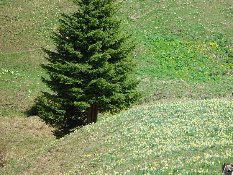Le Pays de l'Or Jaune - La Pesse (39) 0006