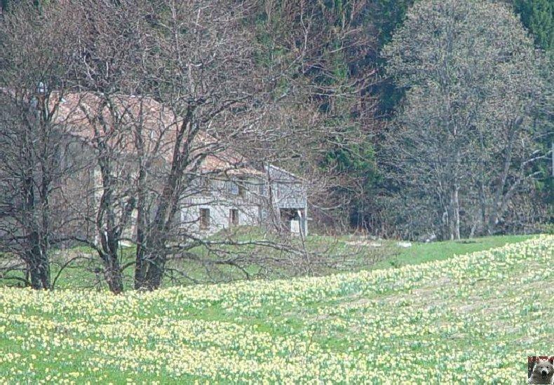 Le Pays de l'Or Jaune - La Pesse (39) 0009