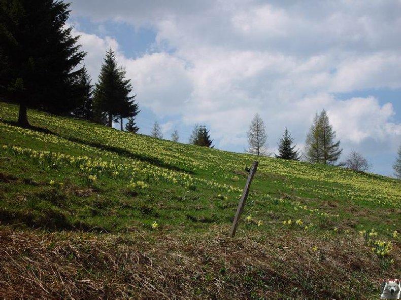 Le Pays de l'Or Jaune - La Pesse (39) 0018