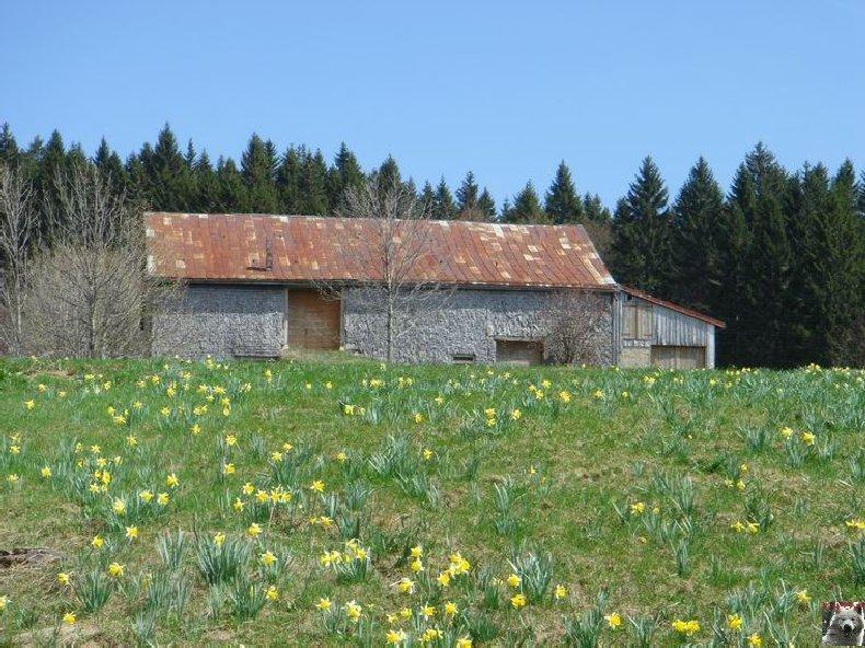 Le Pays de l'Or Jaune - La Pesse (39) 0021