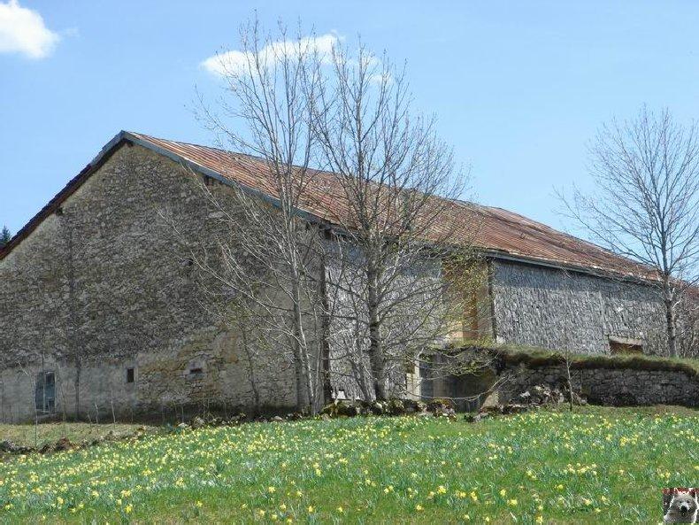 Le Pays de l'Or Jaune - La Pesse (39) 0023