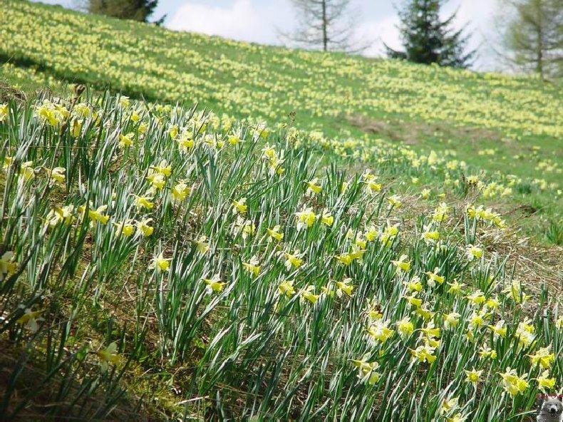 Le Pays de l'Or Jaune - La Pesse (39) 0027