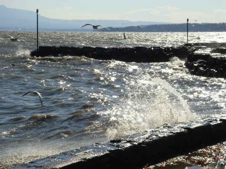 Tempête sur le Lac Léman - Copet (VD) - 20/10/2007 0005