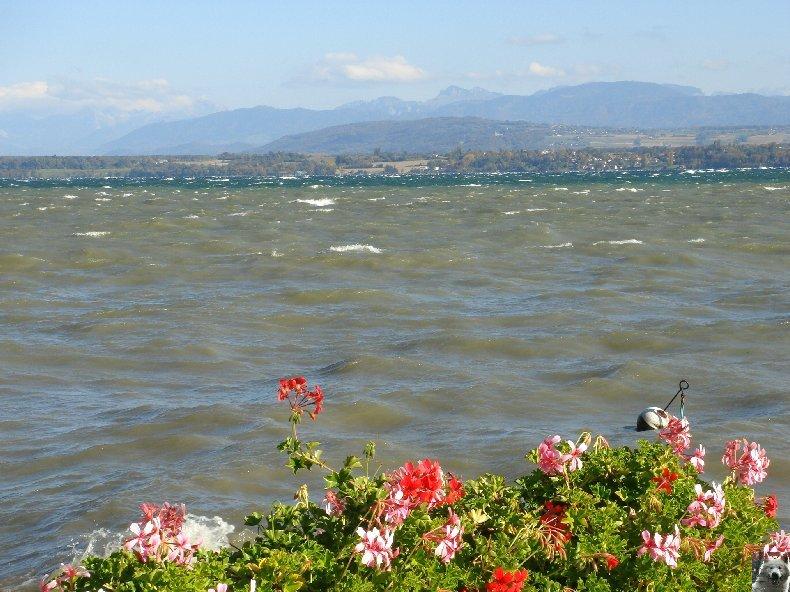 Tempête sur le Lac Léman - Copet (VD) - 20/10/2007 0006