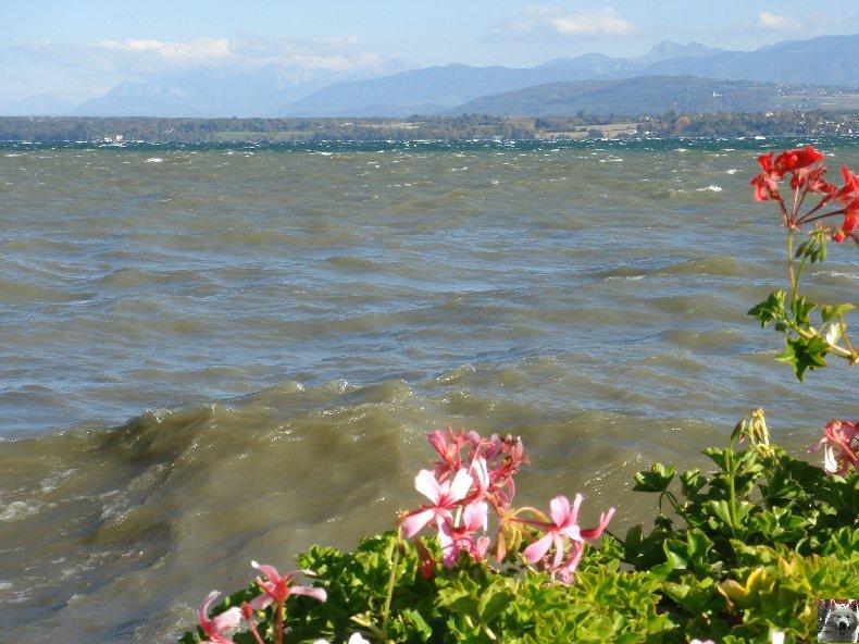 Tempête sur le Lac Léman - Copet (VD) - 20/10/2007 0007