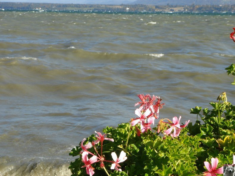 Tempête sur le Lac Léman - Copet (VD) - 20/10/2007 0008