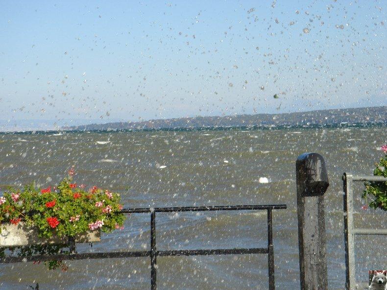 Tempête sur le Lac Léman - Copet (VD) - 20/10/2007 0010