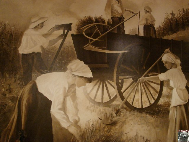 Le Musée Rural - La Pesse (39) 0030