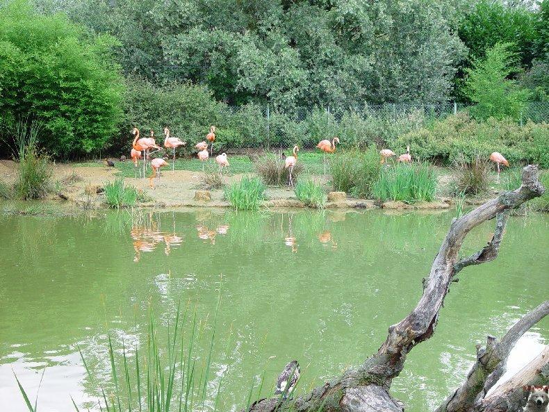Quelques pensionnaires du Parc ornithologique des Dombes (01) 0003