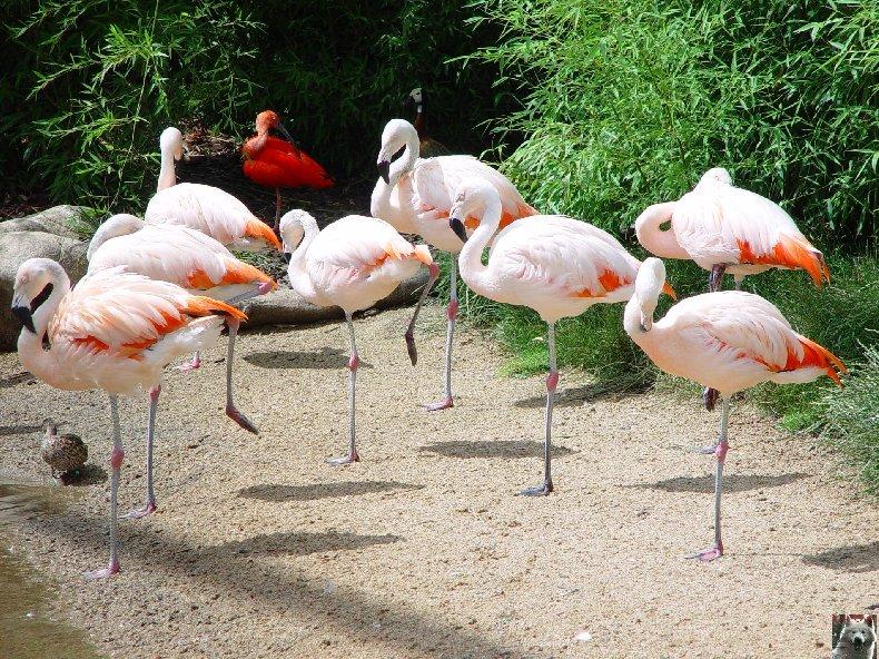 Quelques pensionnaires du Parc ornithologique des Dombes (01) 0004a