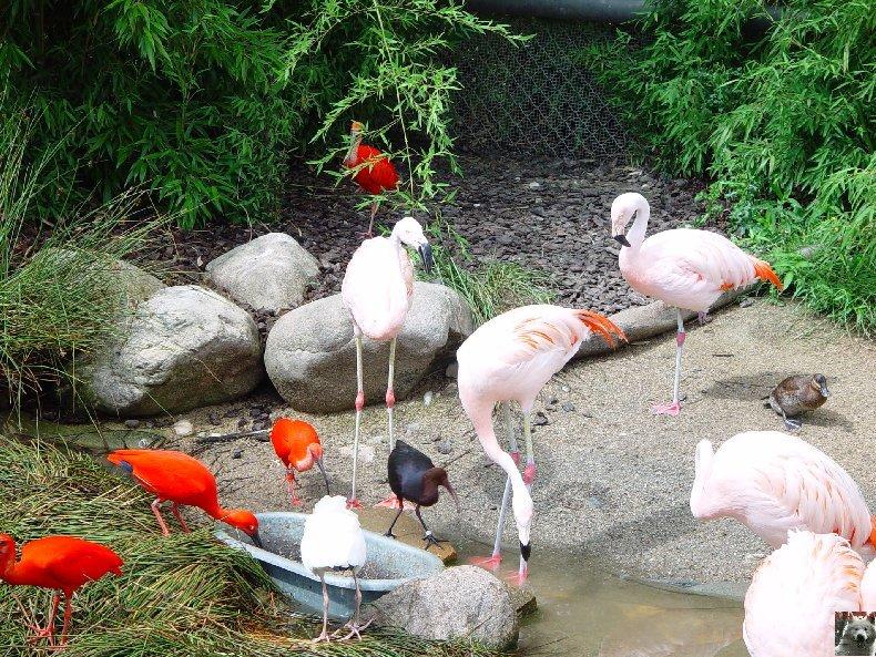 Quelques pensionnaires du Parc ornithologique des Dombes (01) 0004b