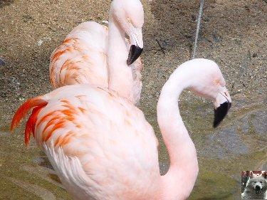 Quelques pensionnaires du Parc ornithologique des Dombes (01) 0004d