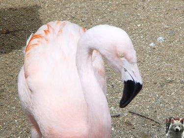 Quelques pensionnaires du Parc ornithologique des Dombes (01) 0004e