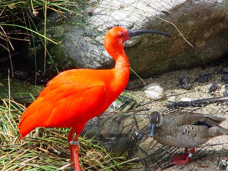 Quelques pensionnaires du Parc ornithologique des Dombes (01) 0012