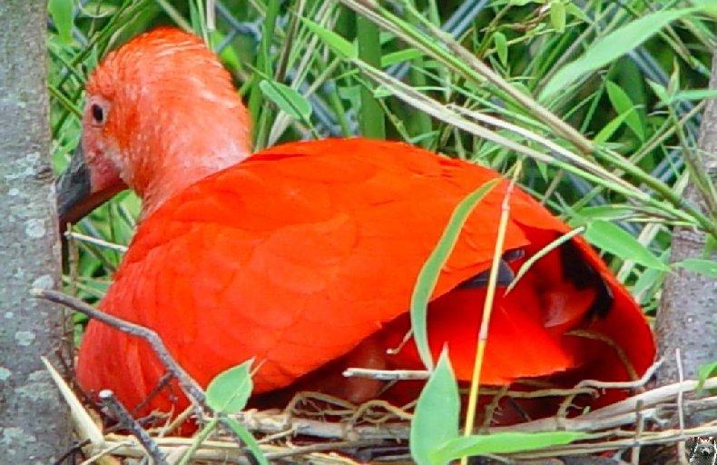 Quelques pensionnaires du Parc ornithologique des Dombes (01) 0014