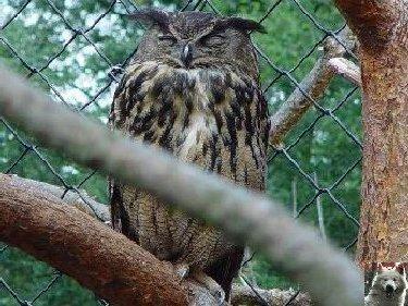 Quelques pensionnaires du Parc ornithologique des Dombes (01) 0033