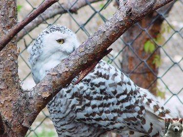 Quelques pensionnaires du Parc ornithologique des Dombes (01) 0034