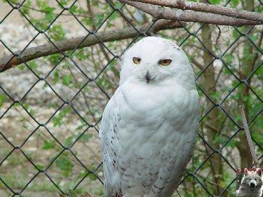 Quelques pensionnaires du Parc ornithologique des Dombes (01) 0035